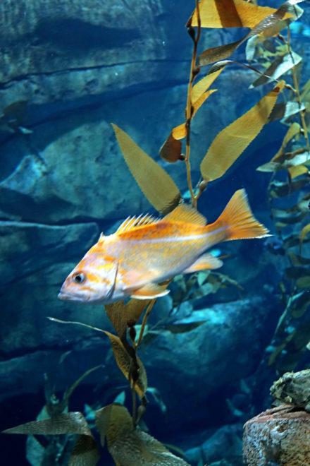 What Is The Largest Aquarium In Canada? - The Biggest