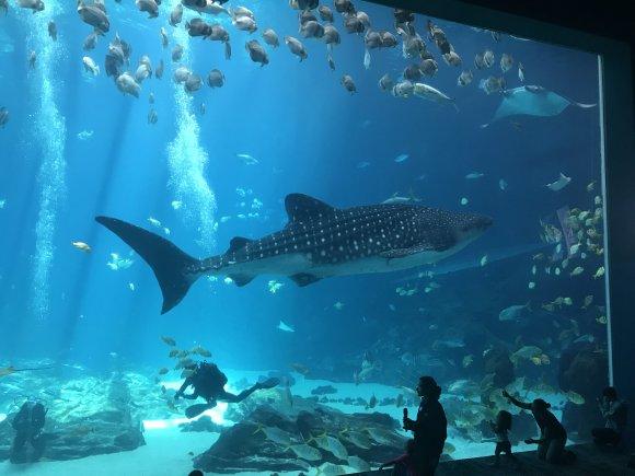 Where Is Largest Aquarium In World? - The Biggest